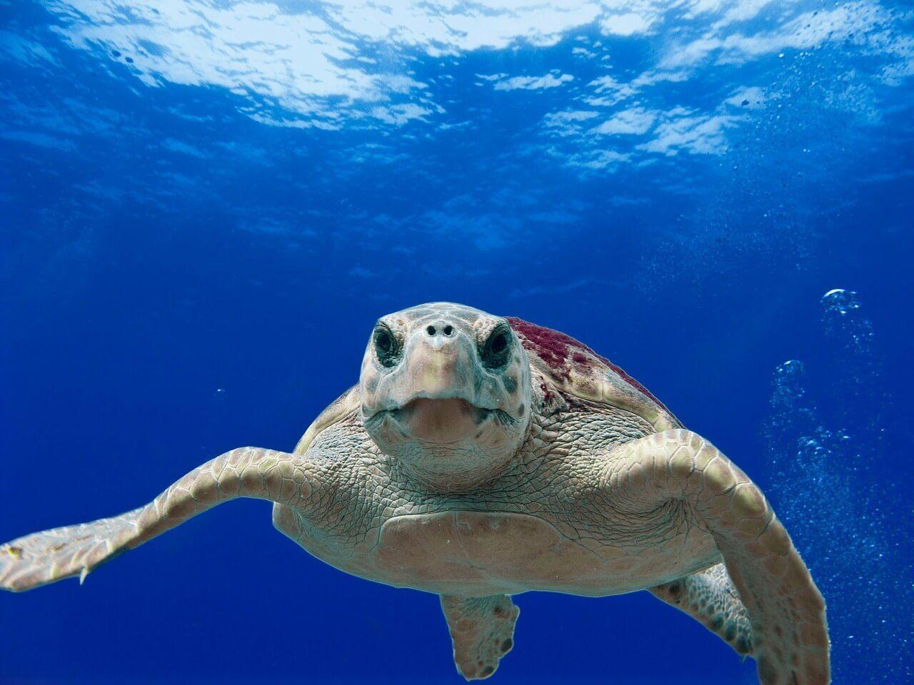 Sea Turtles Arrive to Puerto Vallarta